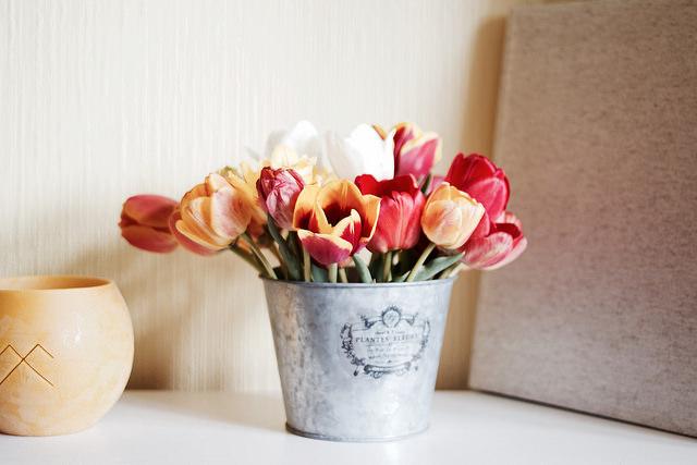 Tulips_84_640.jpg