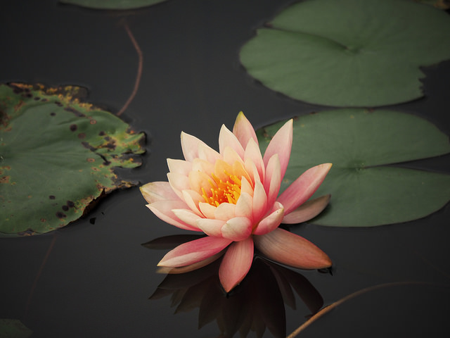 Quiet_lotus_in_winter__40_Hong_Kong_Wetland_Park_8_640.jpg