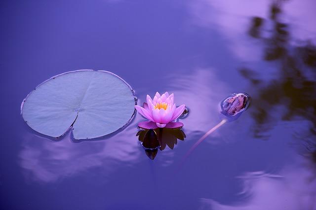 lotus_1205631_640_640.jpg